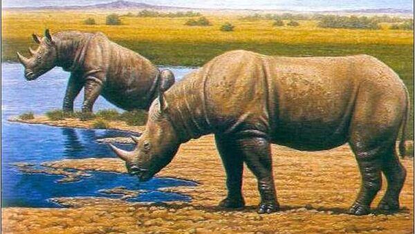 Носорог Стефаноринус