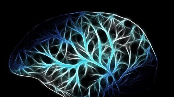 Схематическое изображение мозга
