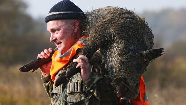 Охота на кабана в Могилевской области