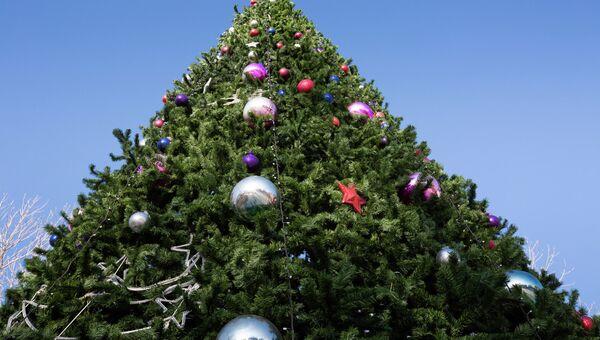 Новогодняя елка в сквере Суханова во Владивостоке